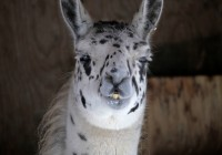 Zoo Gramby  168