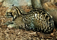Zoo Gramby  183