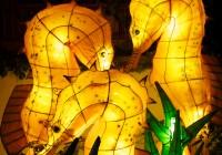 Lanternes  566