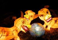 Lanternes  567