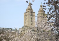 New York 2011  513