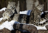 Zoo Gramby  170