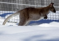Zoo Gramby  172