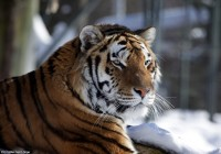 Zoo Gramby  173