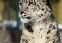 Zoo Gramby  181