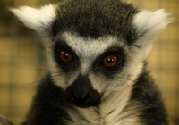 Zoo Gramby  190